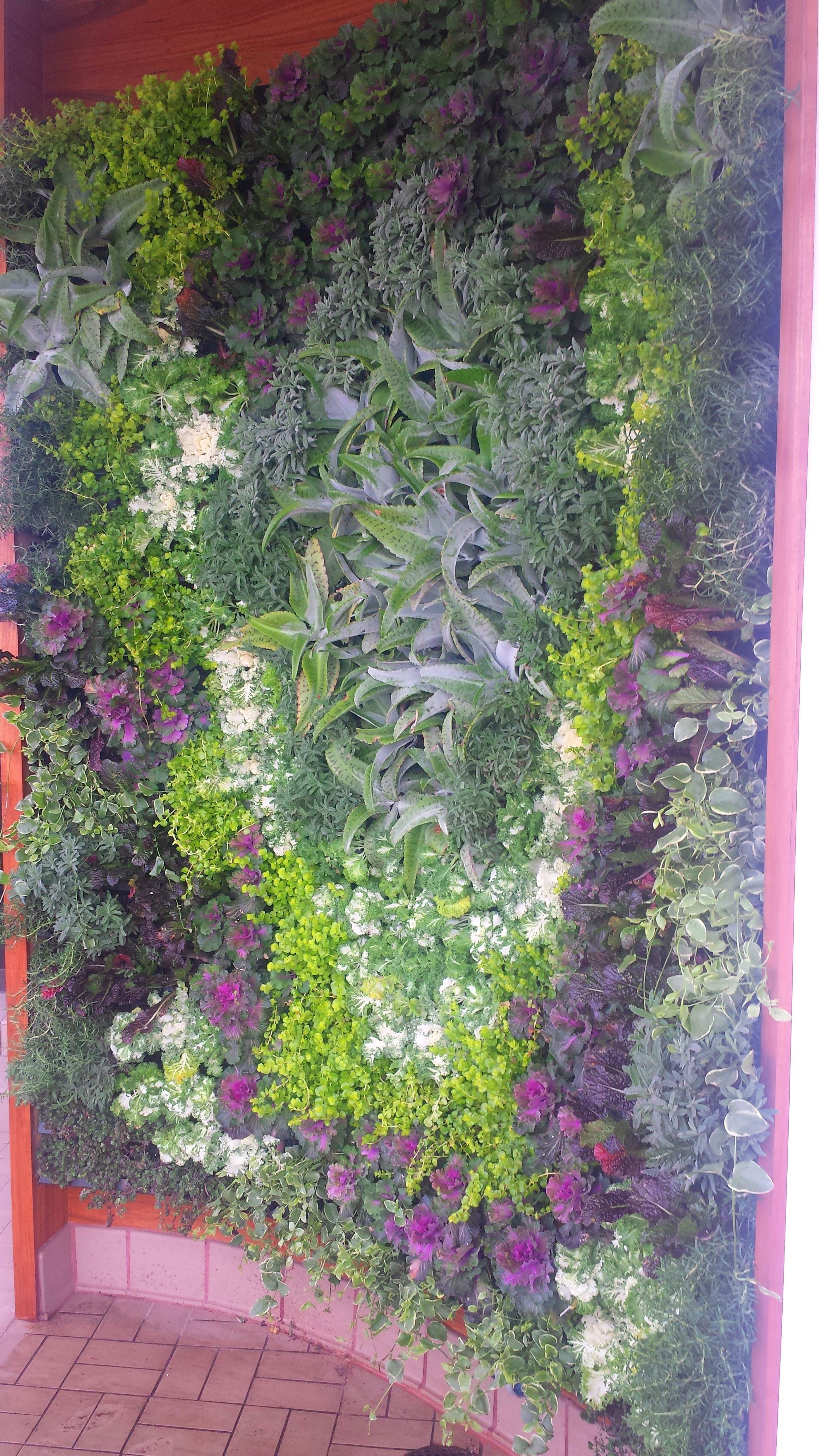 Vertical Garden With Cabbage, Mustards, U0026 Kale