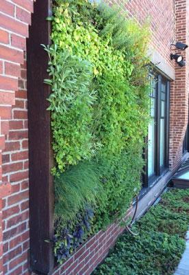 Vertical Herb Garden With Sage, Rue, U0026 Chives